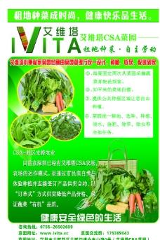 绿色蔬菜海报图片