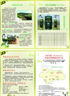 橄榄油宣传单 olive图片