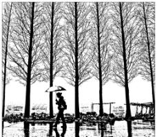 黑白水杉图片