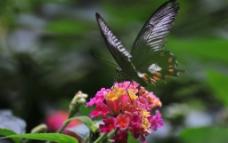 飞蝶彩花图片