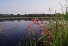 水边草木图片