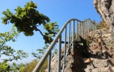 悬崖 柏树图片