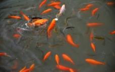 鱼水情图片