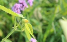 夏天黃色的花圖片