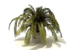 盆景植物图片