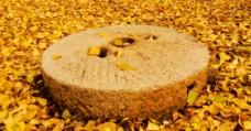 落叶 磨盘图片