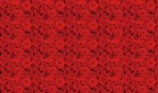 高清玫瑰壁纸图片