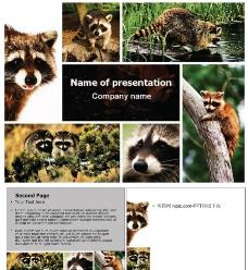 保护动物PPT模板图片