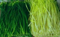 蔬菜 韭胎 黄韭菜图片