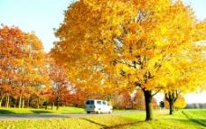 金秋树林图片