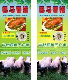 巴马香猪展架图片