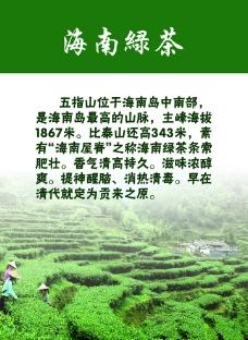 海南绿茶图片