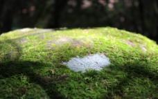 石头苔藓图片