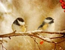 雪中麻雀枝头牛皮纸背景图片