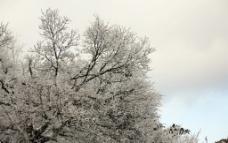 庐山雪图片