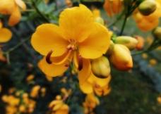 黄色的小野花图片