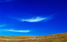 草原 羊群图片