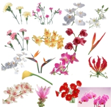 花 鮮花圖片