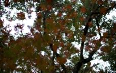 遮盖天空的树叶图片