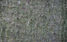 平整树皮图片