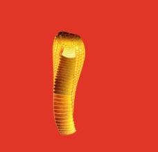 金色眼镜蛇图片