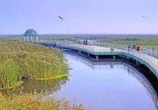 龙凤湿地图片