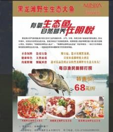 黑龙潭生态大鱼