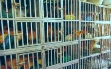 囚舍景观 鸡舍图片