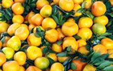 水果 桔子图片