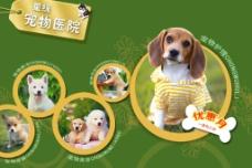 宠物医院网页图片